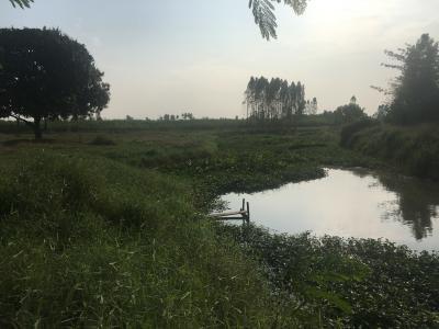 ที่ดิน 0 กาญจนบุรี ท่ามะกา แสนตอ