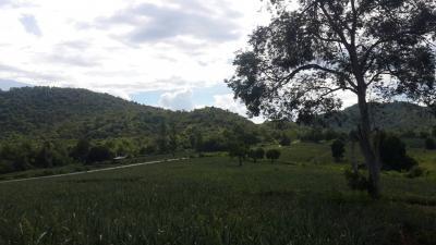 ที่ดินภูเขา 1000000 เพชรบุรี แก่งกระจาน พุสวรรค์