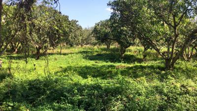 ที่ดิน 370000 เพชรบุรี ชะอำ ไร่ใหม่พัฒนา