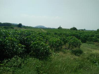 ที่ดิน 4320000 กาญจนบุรี เลาขวัญ เลาขวัญ