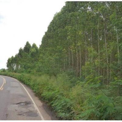 ที่ดิน 650000 ชลบุรี บ้านบึง บ้านบึง
