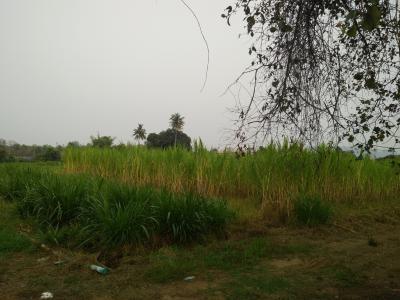 ที่ดิน 10000000 กาญจนบุรี เมืองกาญจนบุรี ท่ามะขาม