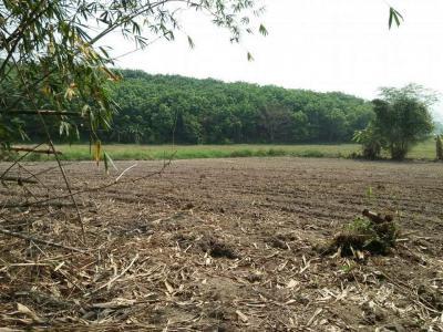 ที่ดิน 150000 เชียงราย กิ่งอำเภอดอยหลวง หนองป่าก่อ