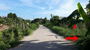 ที่ดิน 20540000 กรุงเทพมหานคร เขตคลองสามวา ทรายกองดิน