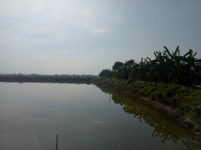 ไร่สวน 43800000 ชลบุรี พนัสนิคม ท่าข้าม