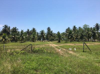 ที่ดิน 7000000 ประจวบคีรีขันธ์ กุยบุรี กุยบุรี