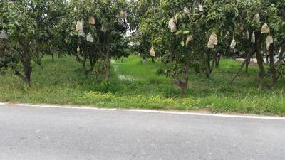 ที่ดิน 7680000 สุพรรณบุรี เมืองสุพรรณบุรี ตลิ่งชัน
