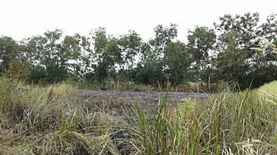 ที่ดิน 490000 ปทุมธานี หนองเสือ ศาลาครุ