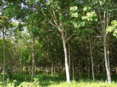 ที่ดิน 3825000 จันทบุรี เมืองจันทบุรี คลองนารายณ์