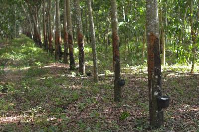 ไร่สวน 4680000 นครศรีธรรมราช ทุ่งสง นาไม้ไผ่