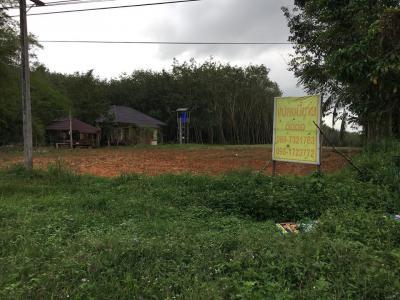 ที่ดิน 59000000 พัทลุง ป่าบอน ทุ่งนารี