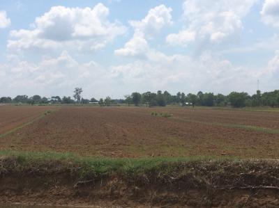 ที่ดิน 1850000 บุรีรัมย์ กิ่งอำเภอบ้านด่าน บ้านด่าน
