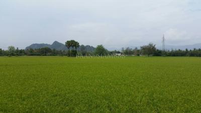ที่ดิน 17800000 เพชรบุรี ชะอำ เขาใหญ่
