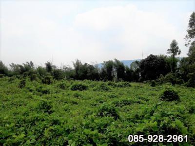 ที่ดิน 3429000 ปราจีนบุรี เมืองปราจีนบุรี เนินหอม
