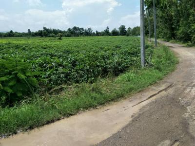 ที่ดิน 120000 ลพบุรี โคกสำโรง คลองเกตุ