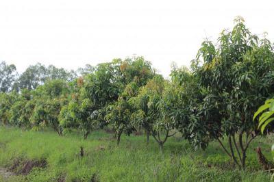 ไร่สวน 6500000 สุพรรณบุรี เมืองสุพรรณบุรี สนามคลี