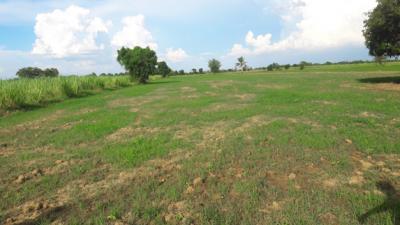ที่ดิน 450000 กาญจนบุรี พนมทวน หนองสาหร่าย