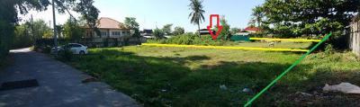 ที่ดิน 2235000 เพชรบุรี เมืองเพชรบุรี ต้นมะม่วง