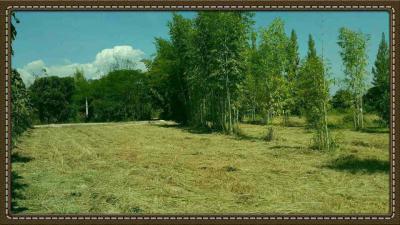 ที่ดิน 6000000 เชียงใหม่ สันป่าตอง สันกลาง