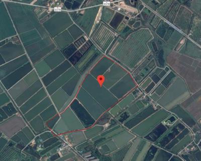 ที่ดิน 108792500 ฉะเชิงเทรา บางคล้า ท่าทองหลาง