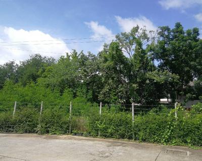 ที่ดิน 60000 เชียงใหม่ เมืองเชียงใหม่ หนองป่าครั่ง