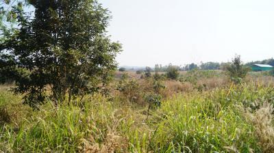 ที่ดิน 5300000 เชียงราย เชียงแสน ป่าสัก