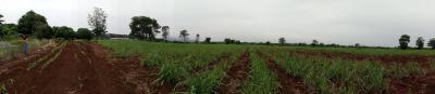 ที่ดิน 7200000 ลพบุรี ชัยบาดาล นาโสม