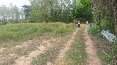 ที่ดิน 6000000 น่าน เมืองน่าน กองควาย