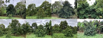 ไร่สวน 2700000 จันทบุรี ท่าใหม่ ท่าใหม่