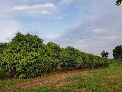 ที่ดิน 18000000 ชัยภูมิ จัตุรัส หนองบัวโคก