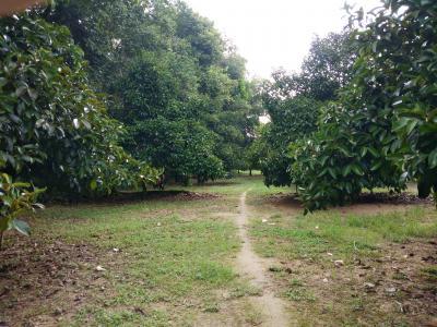 ไร่สวน 5800000 จันทบุรี ท่าใหม่ เขาวัว