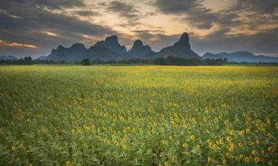 ที่ดิน 7900000 ลพบุรี เมืองลพบุรี นิคมสร้างตนเอง