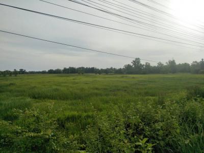 ที่ดิน 276000000 สุราษฎร์ธานี พุนพิน พุนพิน