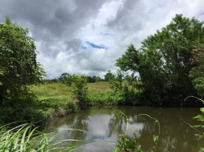 ที่ดิน 200000 เชียงใหม่ แม่แตง สันป่ายาง