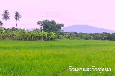 ที่ดิน 299000 เชียงใหม่ สันป่าตอง บ้านกลาง