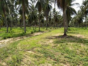 ที่ดิน 3000000 ชลบุรี บางละมุง ตะเคียนเตี้ย
