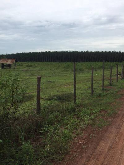 ที่ดิน 3500000 นครพนม ธาตุพนม อุ่มเหม้า