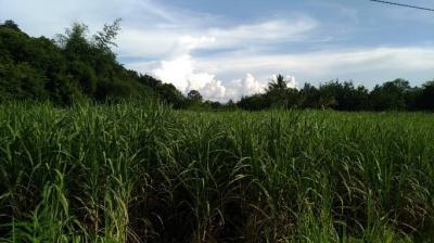 ที่ดิน 530000 ชัยภูมิ เกษตรสมบูรณ์ บ้านเป้า