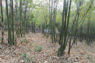 ที่ดิน 600000 เชียงใหม่ ดอยสะเก็ด ป่าเมี่ยง