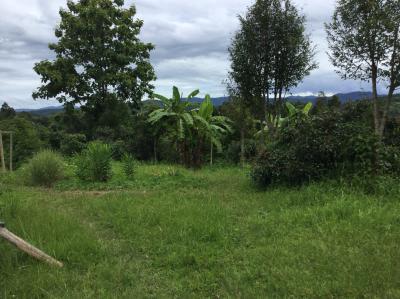 ที่ดิน 5000000 เชียงใหม่ แม่แตง สันป่ายาง