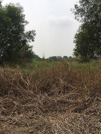 ที่ดิน 500000 ปทุมธานี หนองเสือ บึงบอน