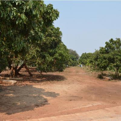 ที่ดิน 1400000 ลำพูน ลี้ ป่าไผ่