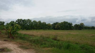 ที่ดิน 800000 เชียงใหม่ สันป่าตอง สันกลาง