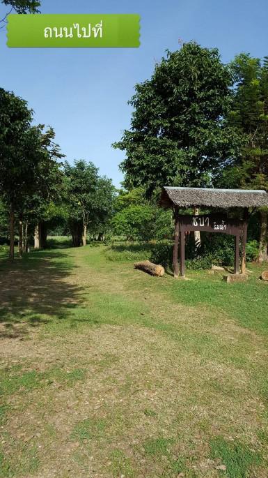 ที่ดิน 350000 เพชรบุรี ท่ายาง กลัดหลวง