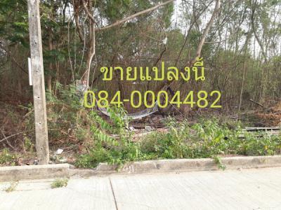 ที่ดิน 1560000 ปทุมธานี ธัญบุรี ประชาธิปัตย์