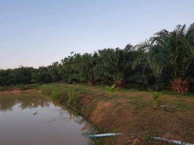 ที่ดิน 1700000 ประจวบคีรีขันธ์ ปราณบุรี หนองตาแต้ม