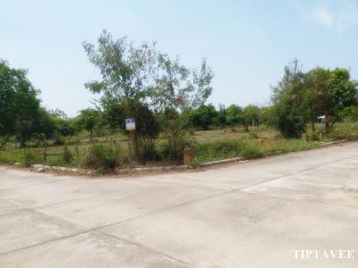 ที่ดิน 1171500 เชียงใหม่ สันป่าตอง ยุหว่า