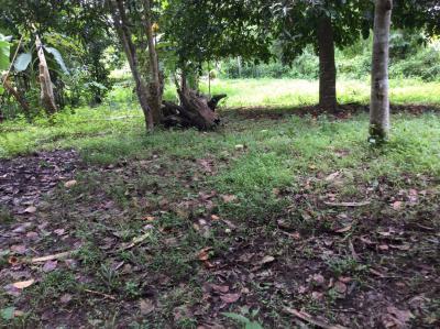 ที่ดิน 1300000 เชียงใหม่ แม่แตง สันป่ายาง