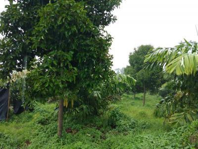 ไร่สวน 18000000 จันทบุรี แหลมสิงห์ คลองน้ำเค็ม