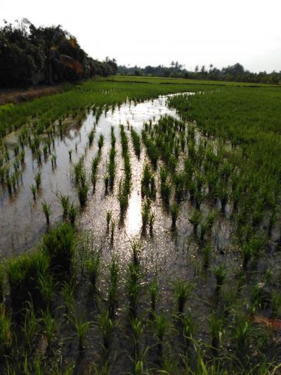 ที่ดิน 3900000 กาญจนบุรี ท่ามะกา ท่ามะกา